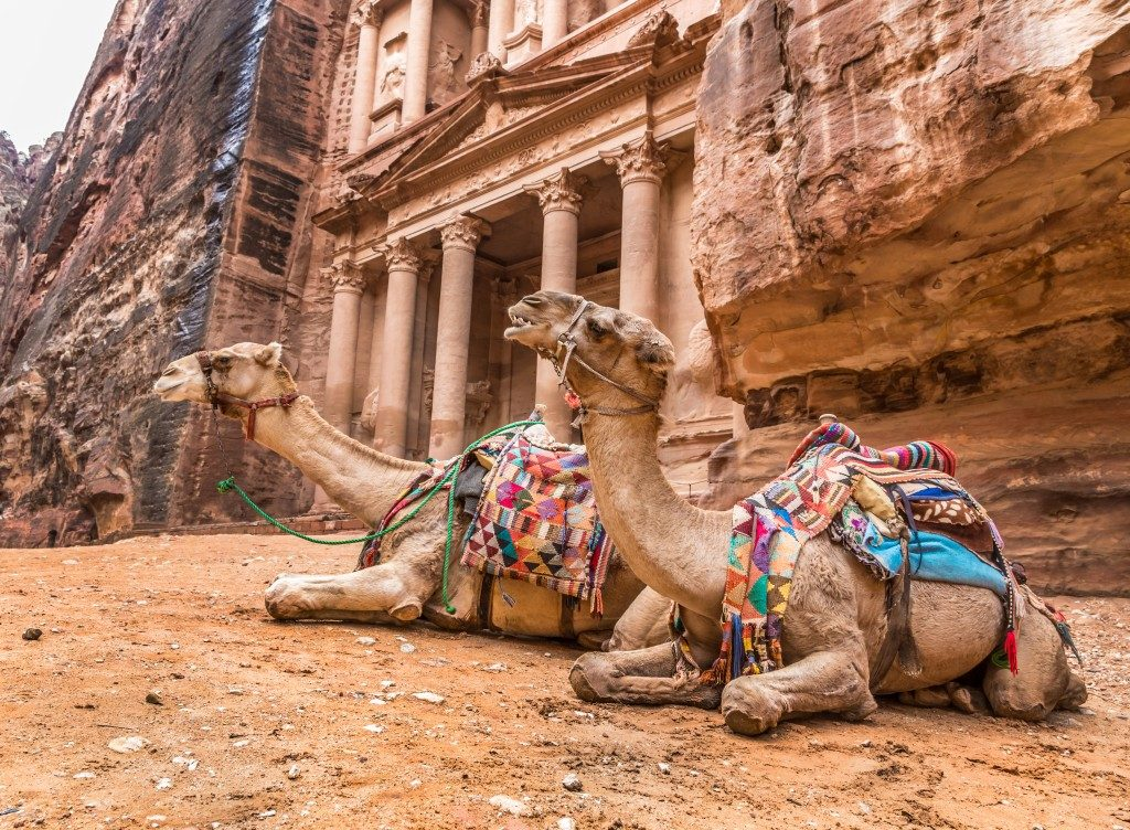 Two bedouin camels rests near the treasury Al Khazneh carved into the rock at Petra, Jordan