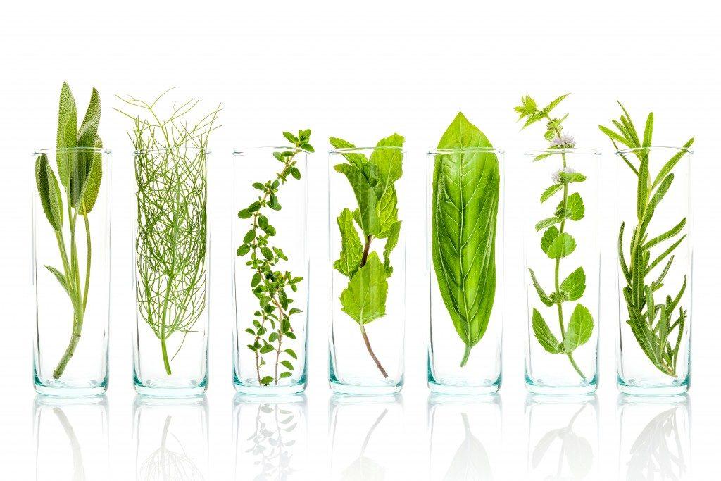 Different herbs inside glasses