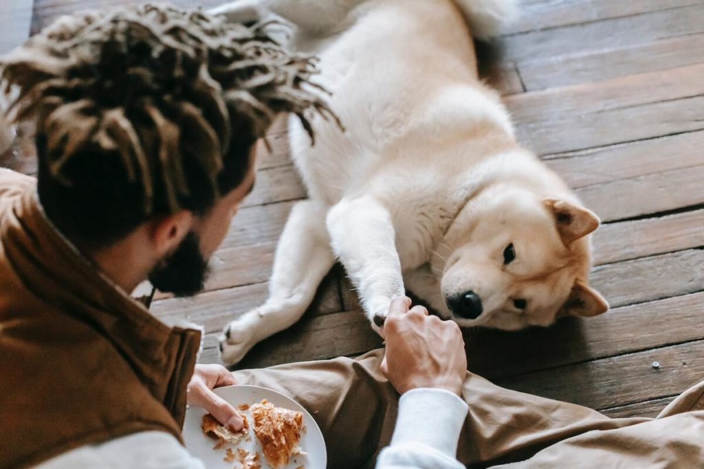 dog begging for food from owners food