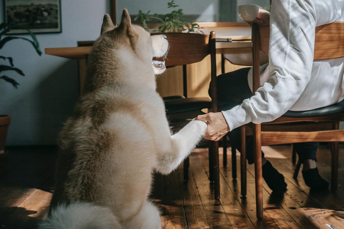 owner holding dog's paw